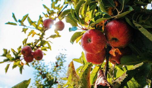 「奇跡のリンゴ」から学ぶ、夢を実現する9つの方法